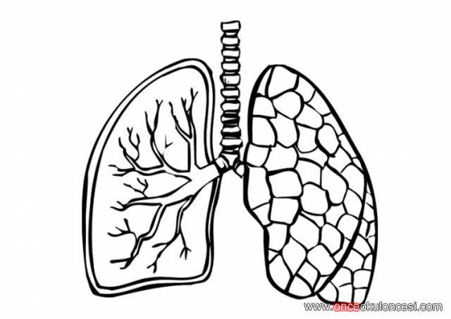yeşilay haftası için kullanabileceğiniz akciğer boyamaları
