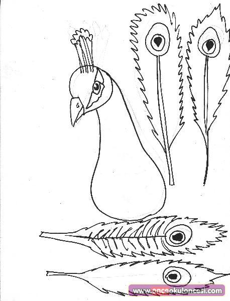 Tavuskuşu Kalıbı