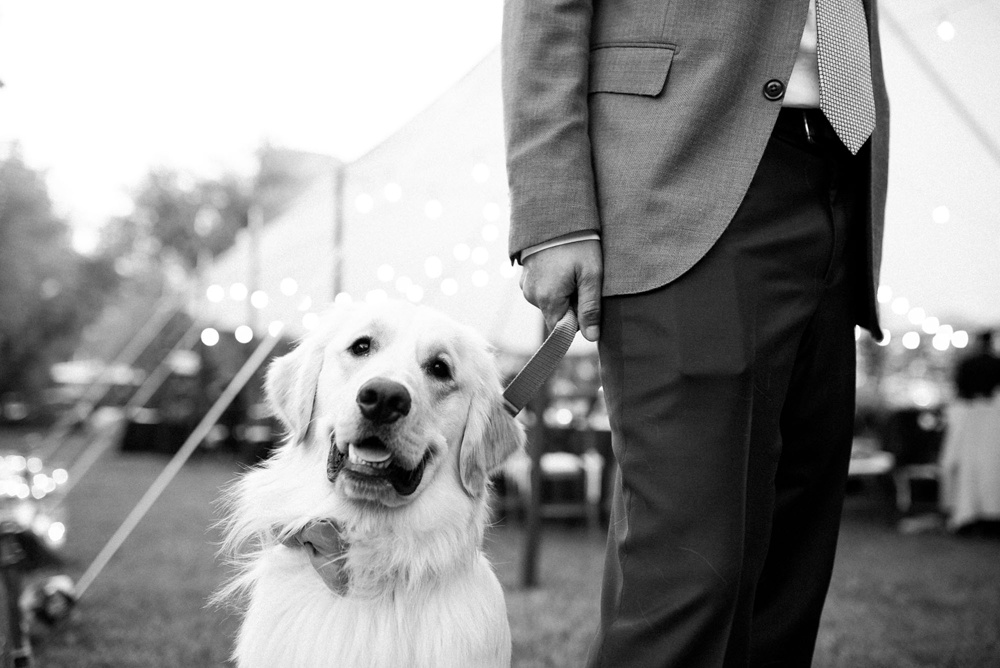 a couple's dog, sporting a bow tie, acts as the best man at their wedding ceremony