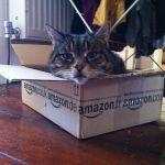 Cat in Amazon box (wikimedia commons)