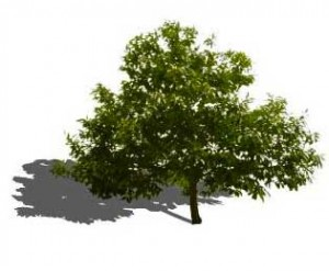25+ Sketchup Landscape Trees Pictures and Ideas on Pro Landscape