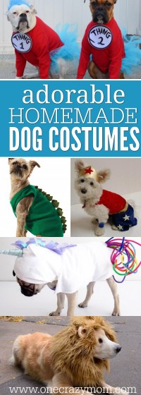 5 Easy Diy Pet Costumes