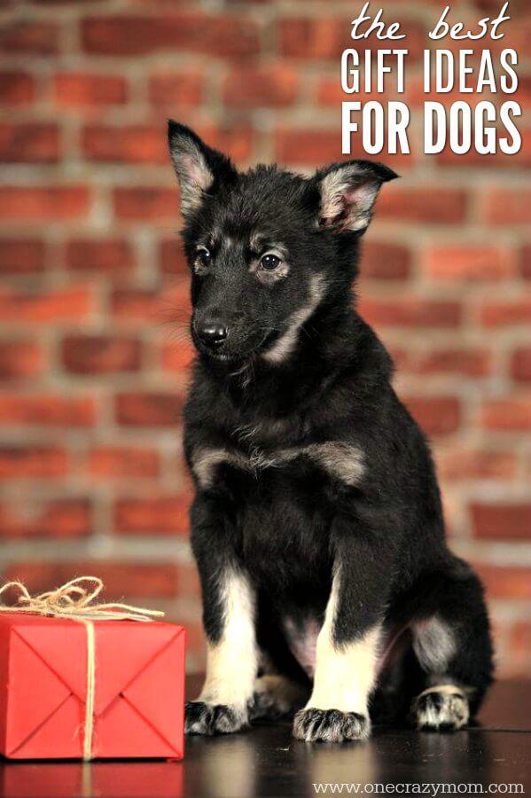 20 dog gift ideas