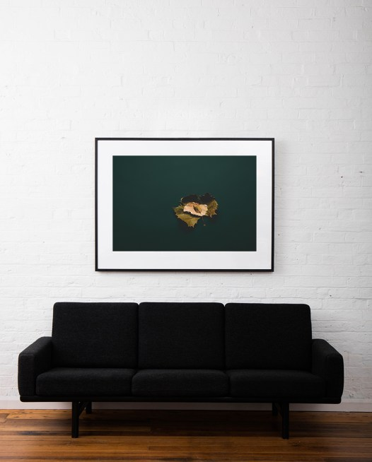 Large Photo of a Autumn leaf with green blackground framed in black timber on white wall above sofa