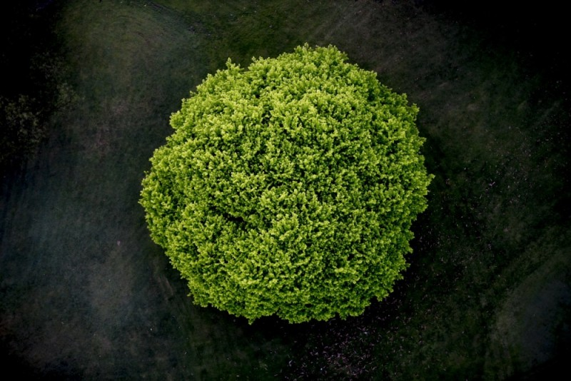 Photography tree aerial abstract