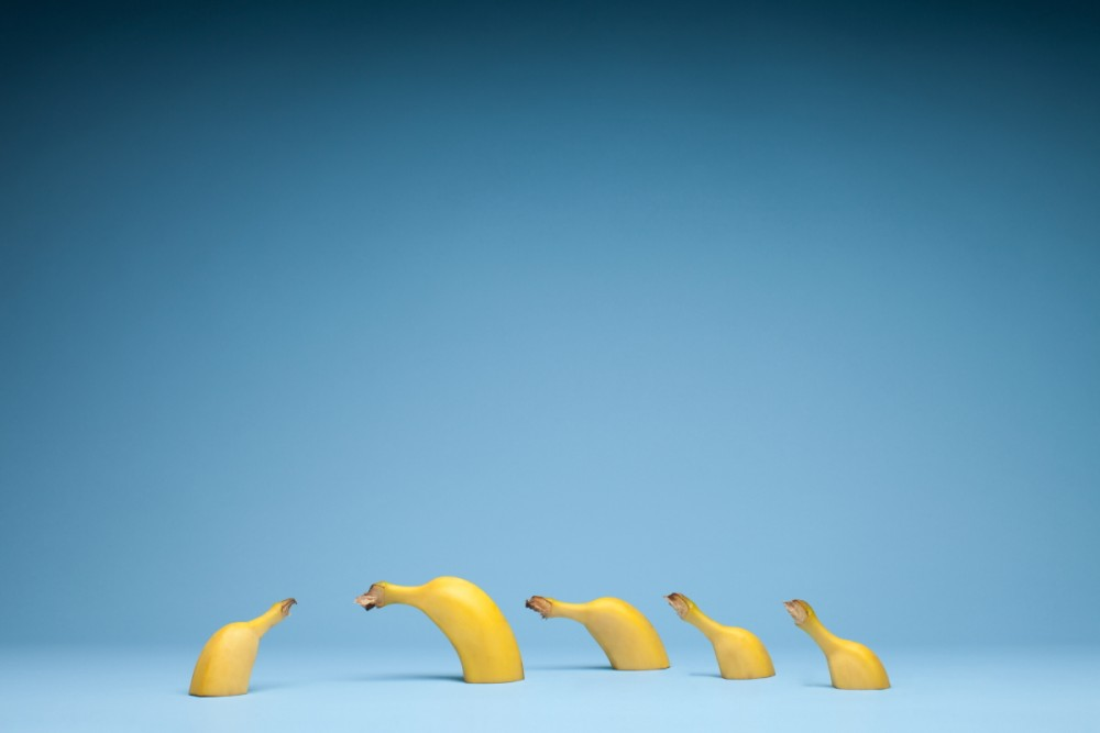Banana photography Print