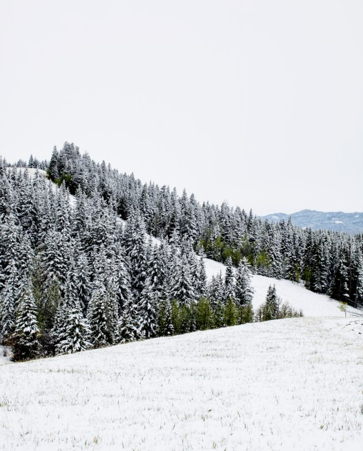 A vertical photographic landscape print of snow, moutain and trees taken in North America in shade of white black and green