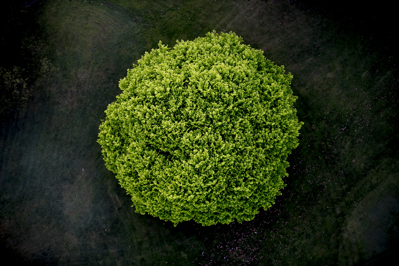 An abstract areial photographic print of the top of a green tree with dark background taken by Elizabeth Bull in Australia