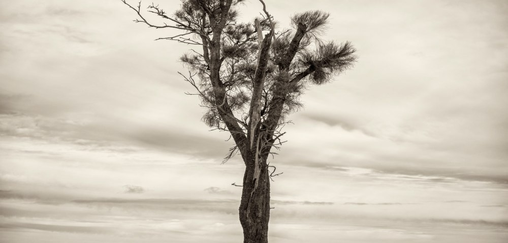Black and white photo of Australian Landscape of fields and trees. ustralian Landscape with feilds and trees