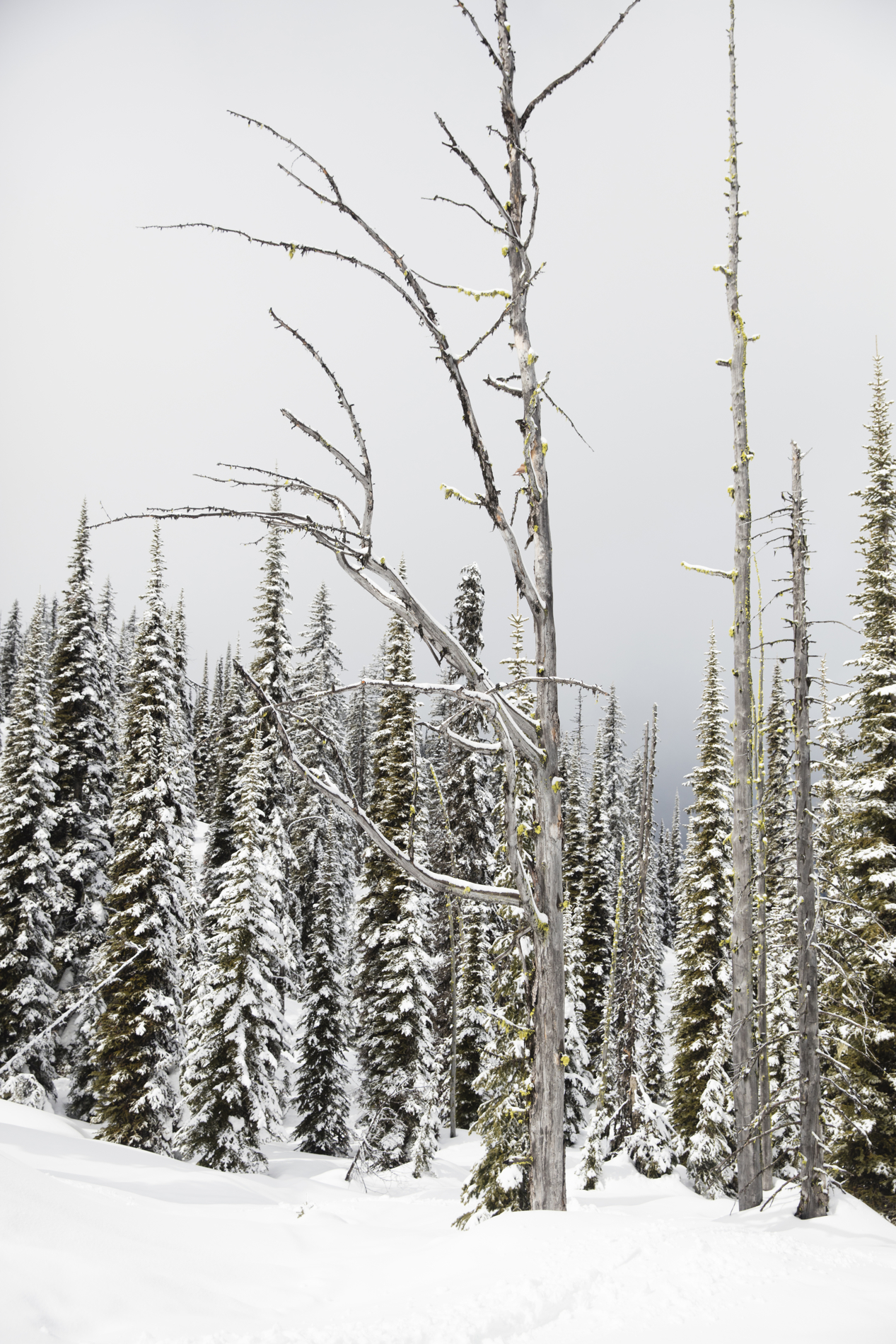 A vertical Landscape photo taken in North America of snow and trees in shade of green , black and white