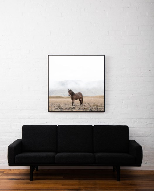 Picture of a horse taken in Iceland framed in black timber above sofa