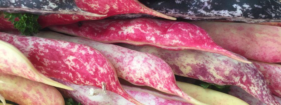 Chatsworth summer beans