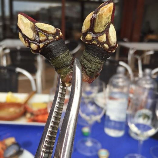 percebes rias baixas and albarino wine one foot in the grapes