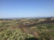 Domaines Paul Mas vineyards herb