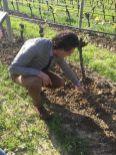 Jean-Claude Mas vineyard