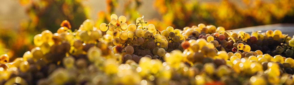 fairtrade wine
