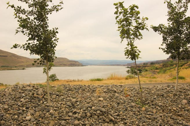 The view of the Columbia River from Jacob Williams' Tasting Room