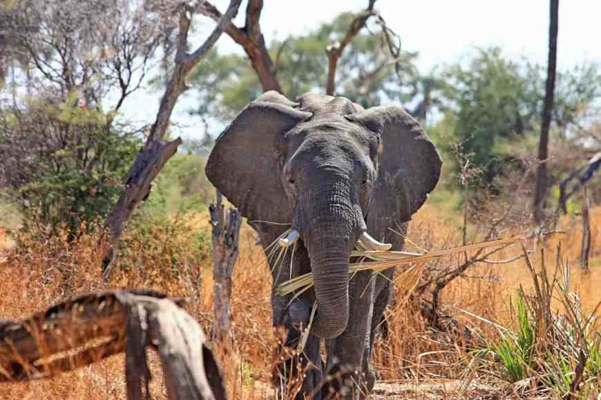 Safari and other natural wonders in South Africa...10 must-visit places in 2017