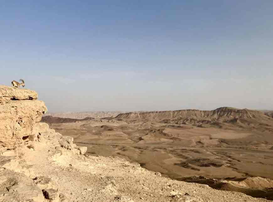 An ibex overlooks the Mitzpe Ramon Crater, a must-see between Tel Aviv and Eilat
