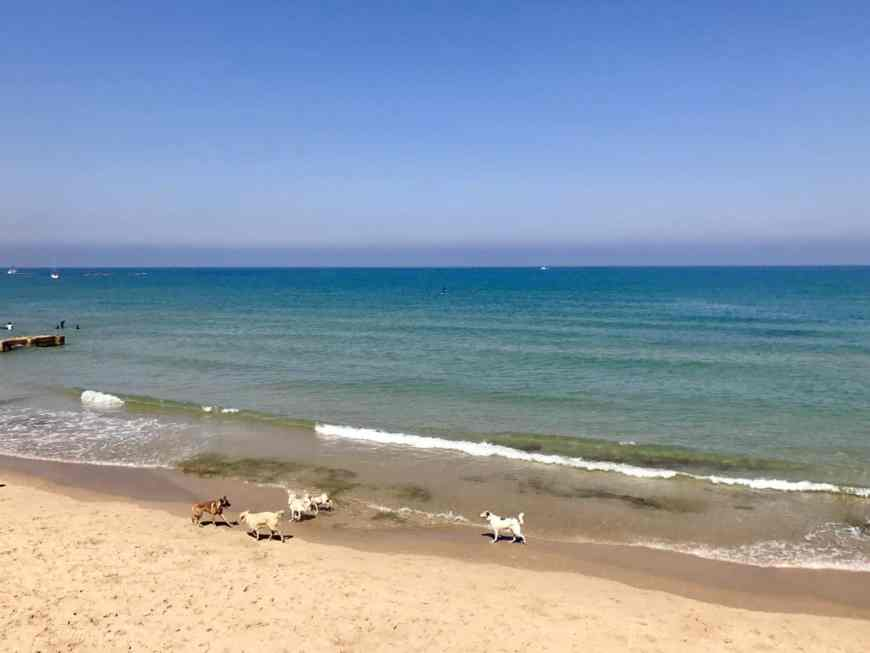 The beaches of Tel Aviv are one of its biggest draws...tips for what to do in Tel Aviv & Jaffa with only a few hours!
