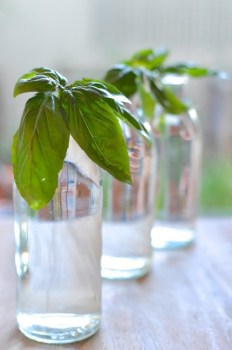 Regrowing Foods