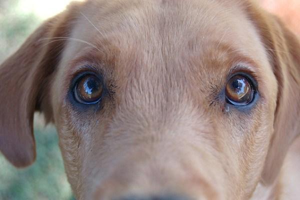 dog meat ban china