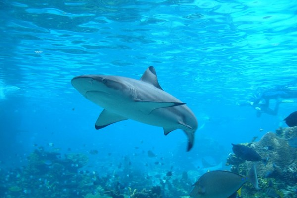 shark fin shark conservation