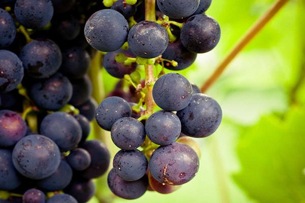 vegan wine company vegan vine