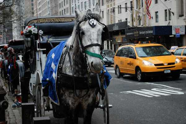 carriage horse new york_4