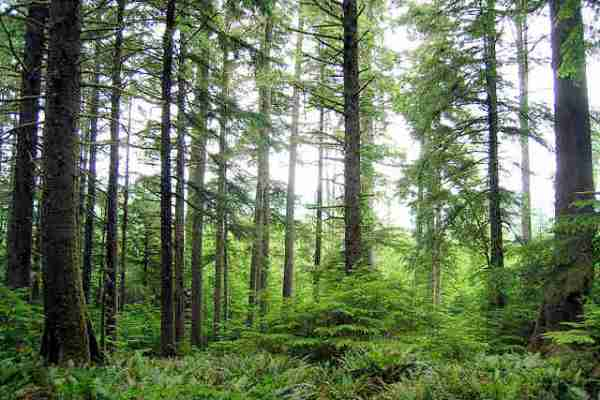 Climate Change and the future of U.S. Forests
