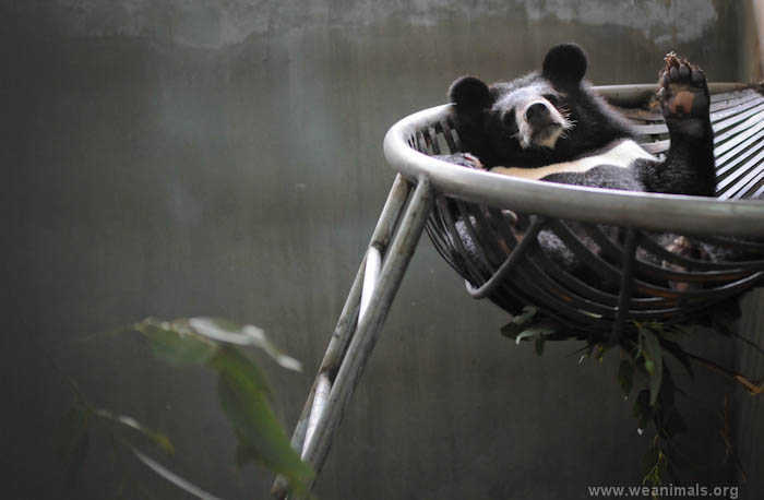 A Behind-The-Scenes Look at a Moon Bear Rescue