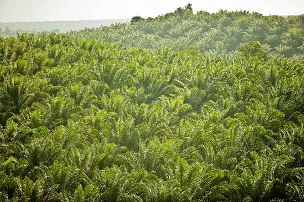 Palm Oil Company Fined for Land Clearing