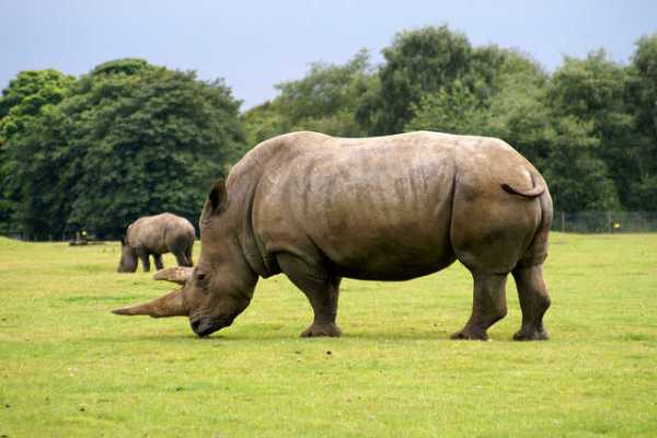 Rhino Poachers Given Heavy Sentences