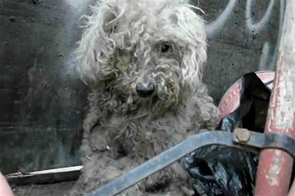 WATCH: Amazing Rescue of Blind Dog from LA Parking Lot