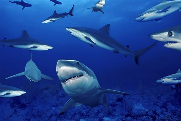 EU Set to Ban Shark Finning