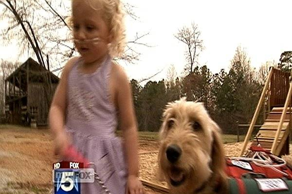 WATCH: Therapy Dog Helps Three-Year-Old with Lung Condition