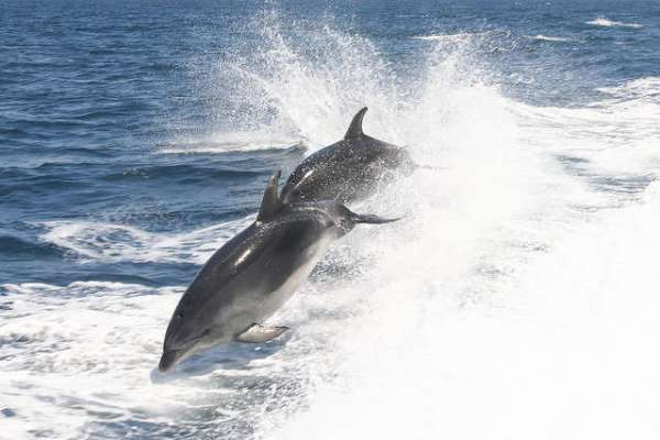 Sexual Lives of Dolphins are Complex and Full of Drama