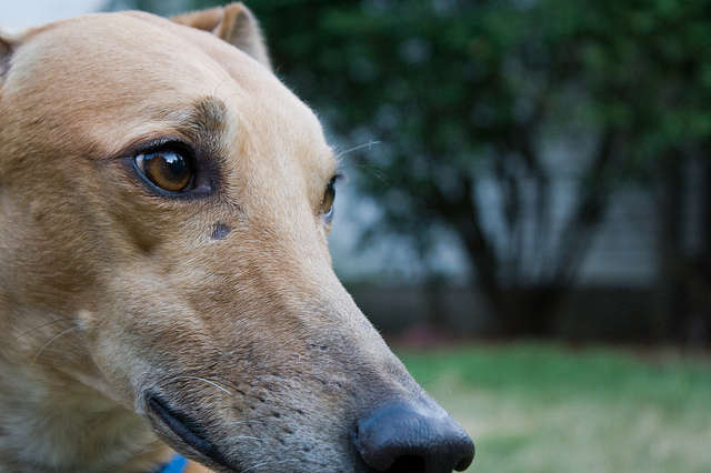 Greyhound Races: Cruel and Unprofitable