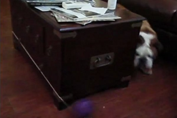 WATCH: Perpetual Motion Dog