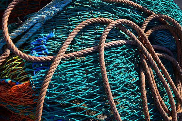Can Sustainable Seafood Labels be Trusted?