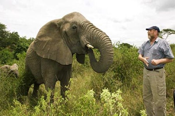 Wild Elephants Mourn Death of Elephant Whisperer
