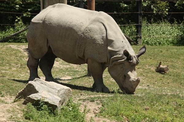 New Video Cameras Document Endangered Javan Rhinos