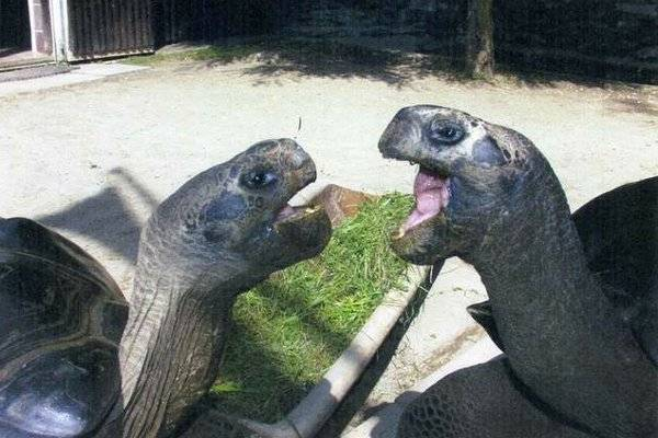 115 Year Old Tortoise Marriage Ends In Divorce
