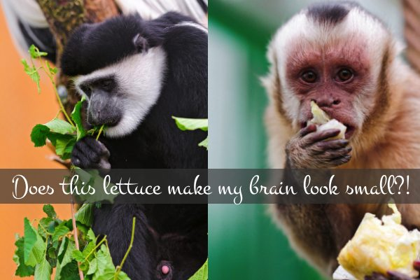 Raw Food = Smaller Brains?