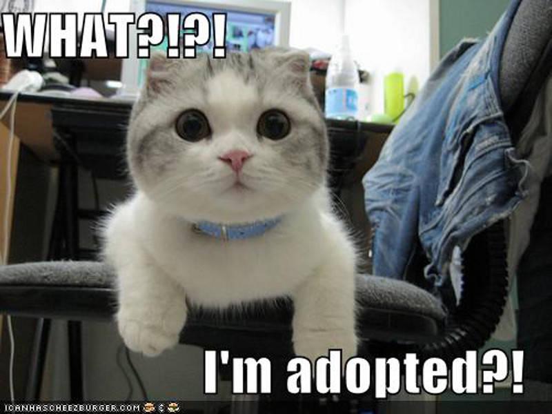 pet adopt