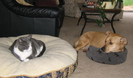 cat-steals-dog-bed