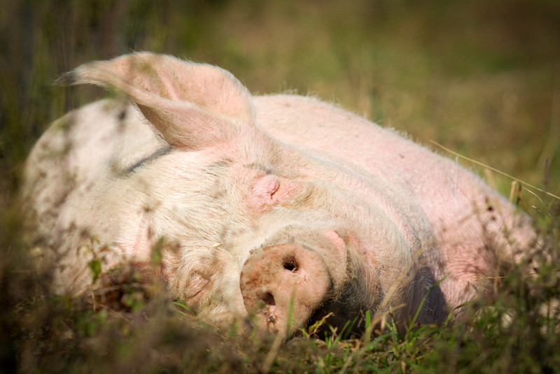 10 Amazing Farm Animal Sanctuaries You Should Support