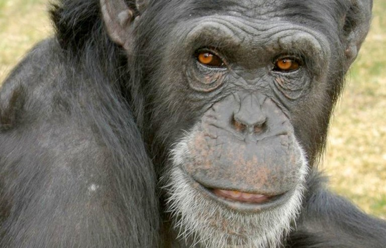 Meet 4 Kick-Ass Animals Who Broke Free from Captivity!