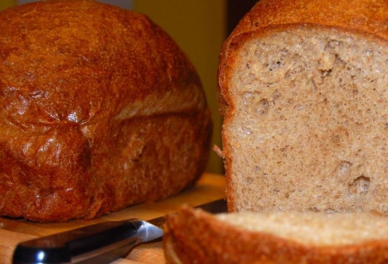 800 High-Protein-Whole-Wheat-Sandwich-Bread-And-Knut-The-Polar-Bear-1174x800