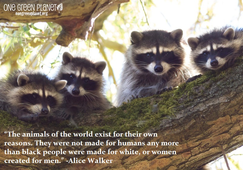 Animals Quotes Pleasing 14 Quotes Every Animal Advocate Should Knowheart  One Green